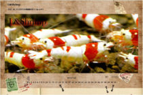 L&Shrimp